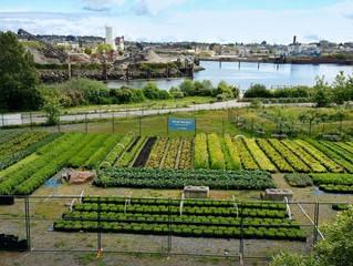 Urban Agriculture 101
