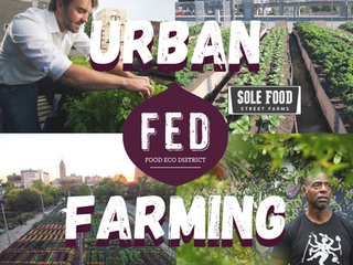 Become Part of the Urban Food-Growing Movement!