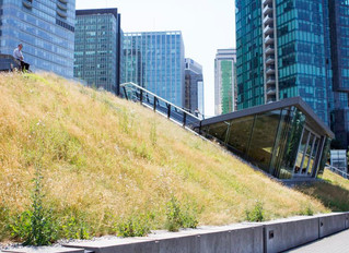 Green Roofs: Does a City Good
