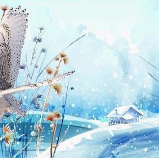 wildlife5