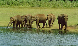 elefanti nel Parco di Periyar in Kerala