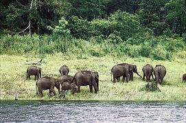 elefanti nel Parco di Periyar