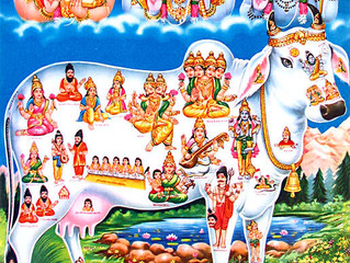 Perchè in India la mucca è sacra?