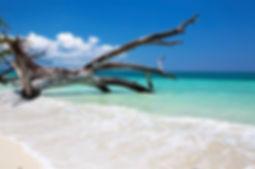 una spiaggia ad havelock