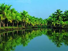 palme da cocco in Kerala