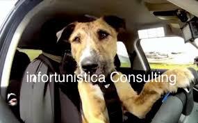 Come viaggiare sicuri in auto col cane