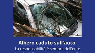 Danni da maltempo, Albero caduto sull'auto, chi paga?
