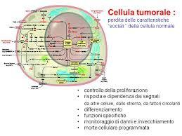 cellula tumore.jpg