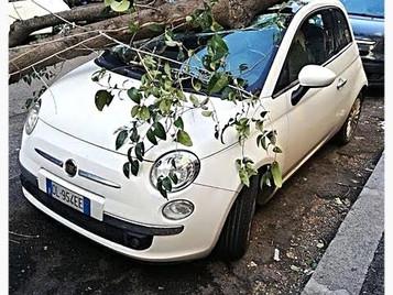 Albero caduto sull'auto, chi paga e quale assicurazione è utile?