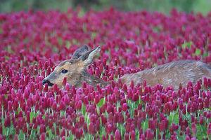 La Sologne sans engrillagement pour une Nature plus belle en liberté.