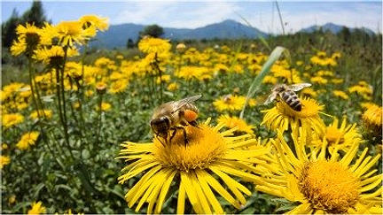 Reading PA honeybee removal