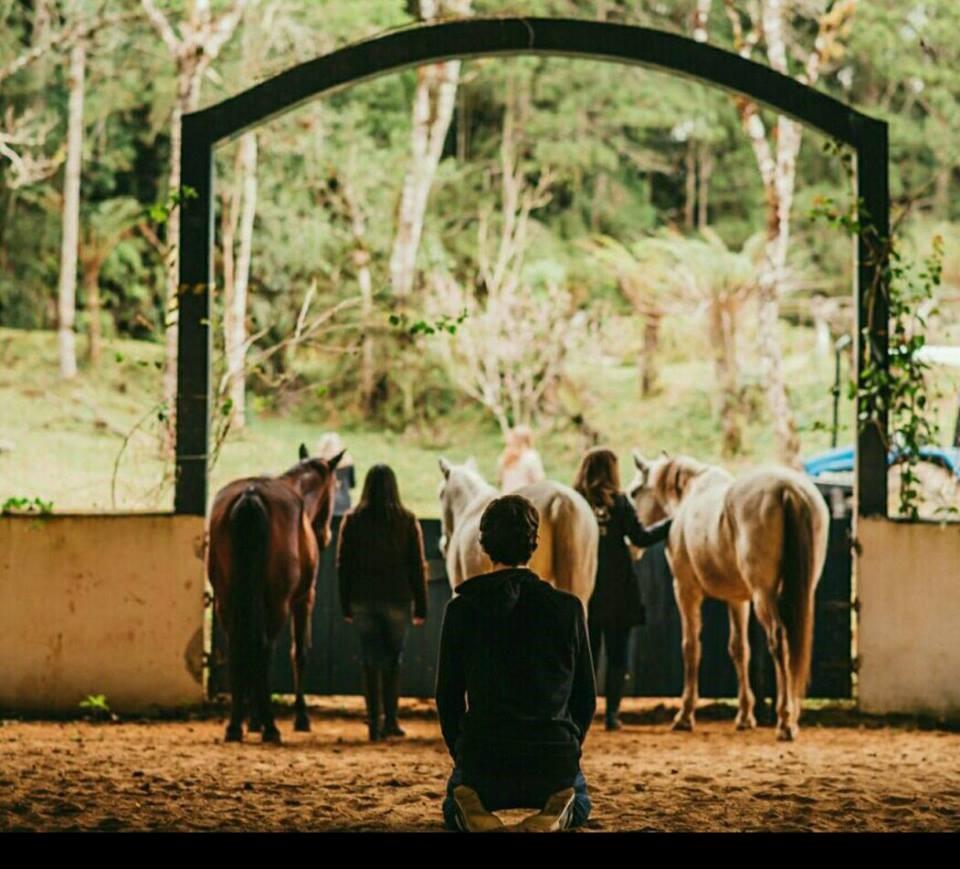 Coaching_Sistêmico_com_Cavalos_Qi_Hai_Terapias_e_Vivências_Ana_Paula_Rocha_Lara_Hope