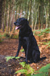 Man's Best Friend - Dog Photography