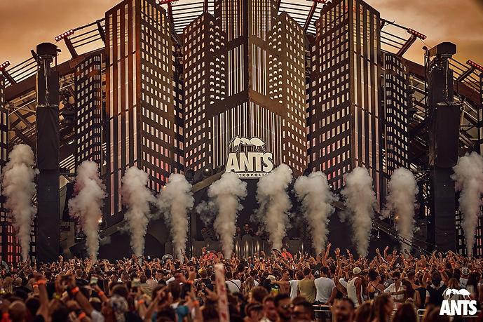 Ants 1.jpg