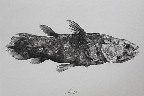 Tammy Mackay - HOPE (coelacanth)