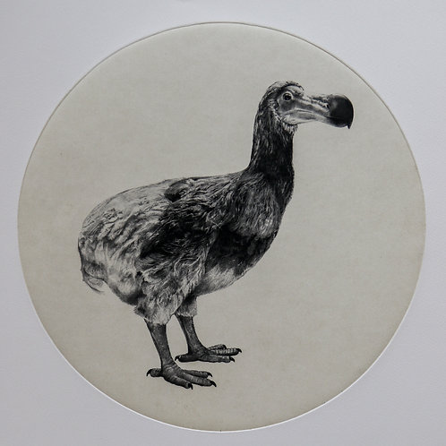 Tammy Mackay - THE DUTCH DODO