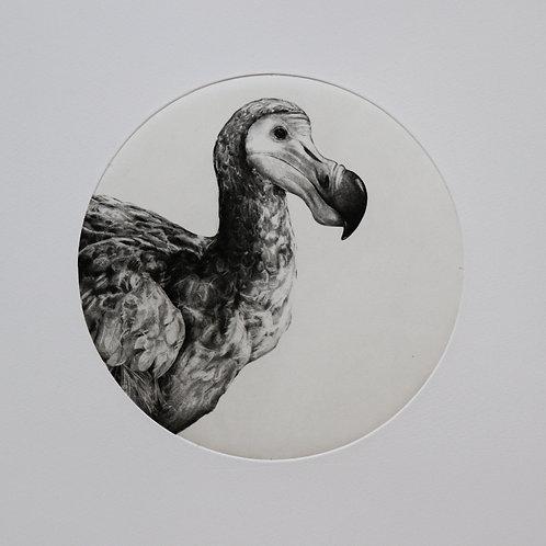 Tammy Mackay - untitled dodo