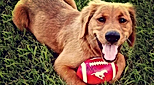 CFP DOGS HEADER.png