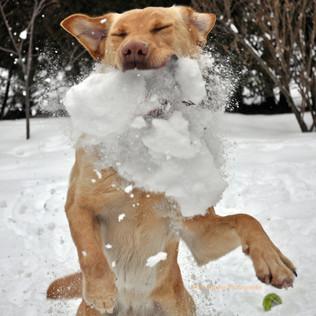 Snowy Snack