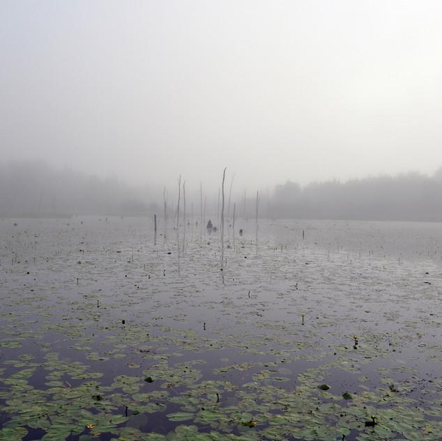 Foggy Duckpond Morning
