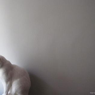 Peanut by the Window
