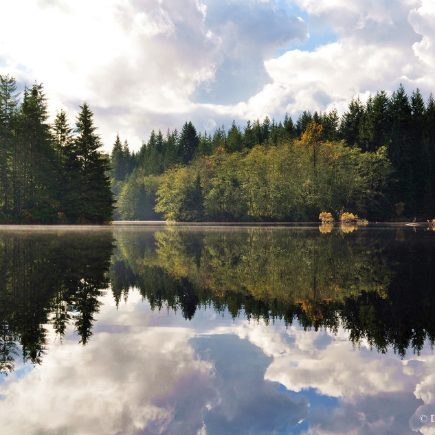 Rice Lake Dawn