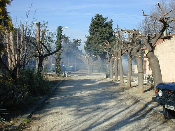 Allée d'arbres nouvellement élagués