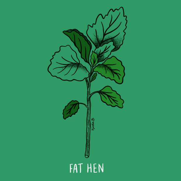 Fat Hen Botanical Illustration