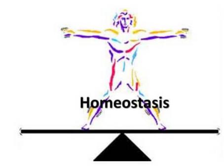GLUTATION y HOMEOSTASIS