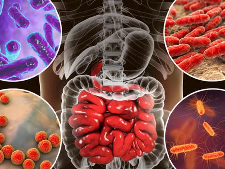 Estudio: Uso de antibióticos o criarse en un Ambiente Esteril - Incrementa Problemas INMUNITARIOS