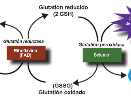 Funciones de la NAC y el glutatión en el tratamiento prometedor contra el COVID-19