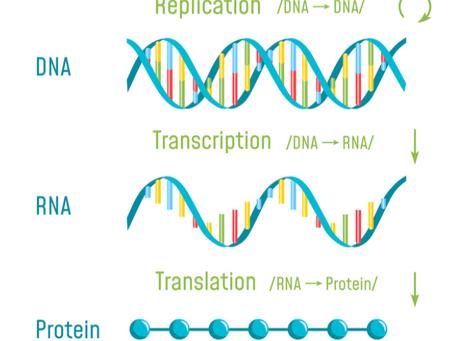 Despues de Vacunacion con Tecnologia mRNA estudios de plasma muestran residuos en multiples organos