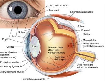 Glutation y Enfermedades Oculares