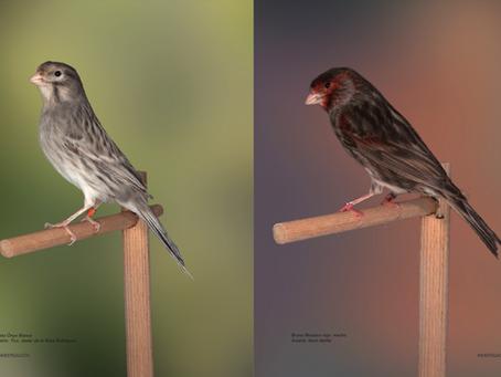 Glutation: papel biológico y efectos en las aves.