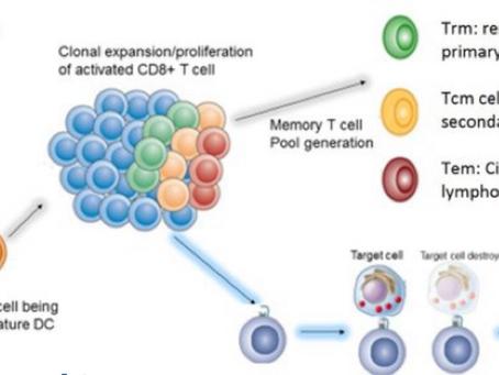 Pacientes con COVID-19 a menudo muestran recuentos bajos de Glóbulos Blancos