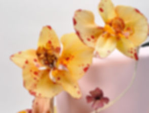 Moth Orchids Sugar Flowers