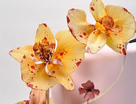Moth Orchids Sugar Flowers