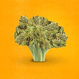 BudBud_SEPT_7-Broccoweed.png