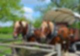 HORSE AND WAGON (1).JPG