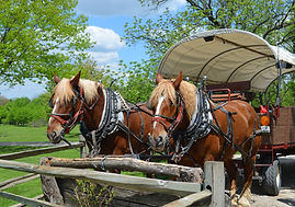HORSE AND WAGON (1).JPG