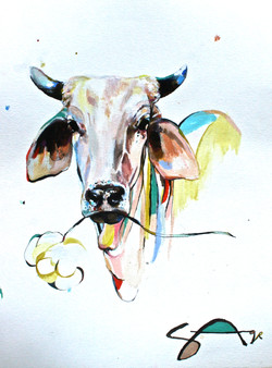 The Cow One
