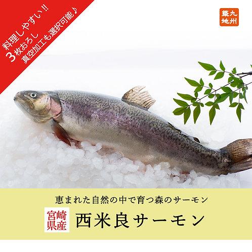 【6月限定★特別価格】西米良サーモン   (卸・真空加工対応可能)