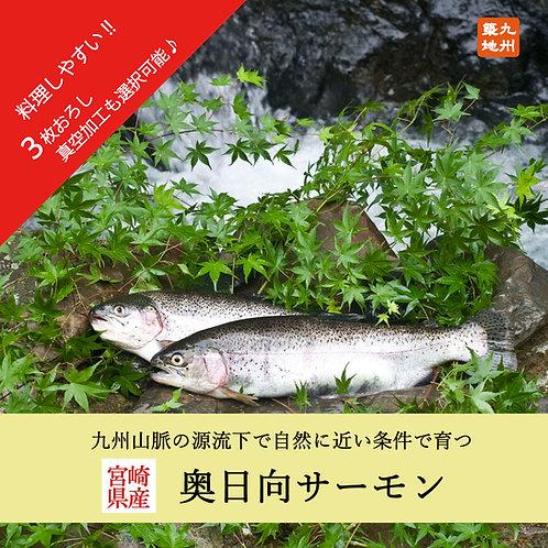 【6月限定★特別価格】奥日向サーモン   (卸・真空加工対応可能)