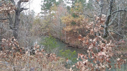 20 Acres with Creek