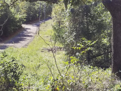 Bear Creek 30 Acres