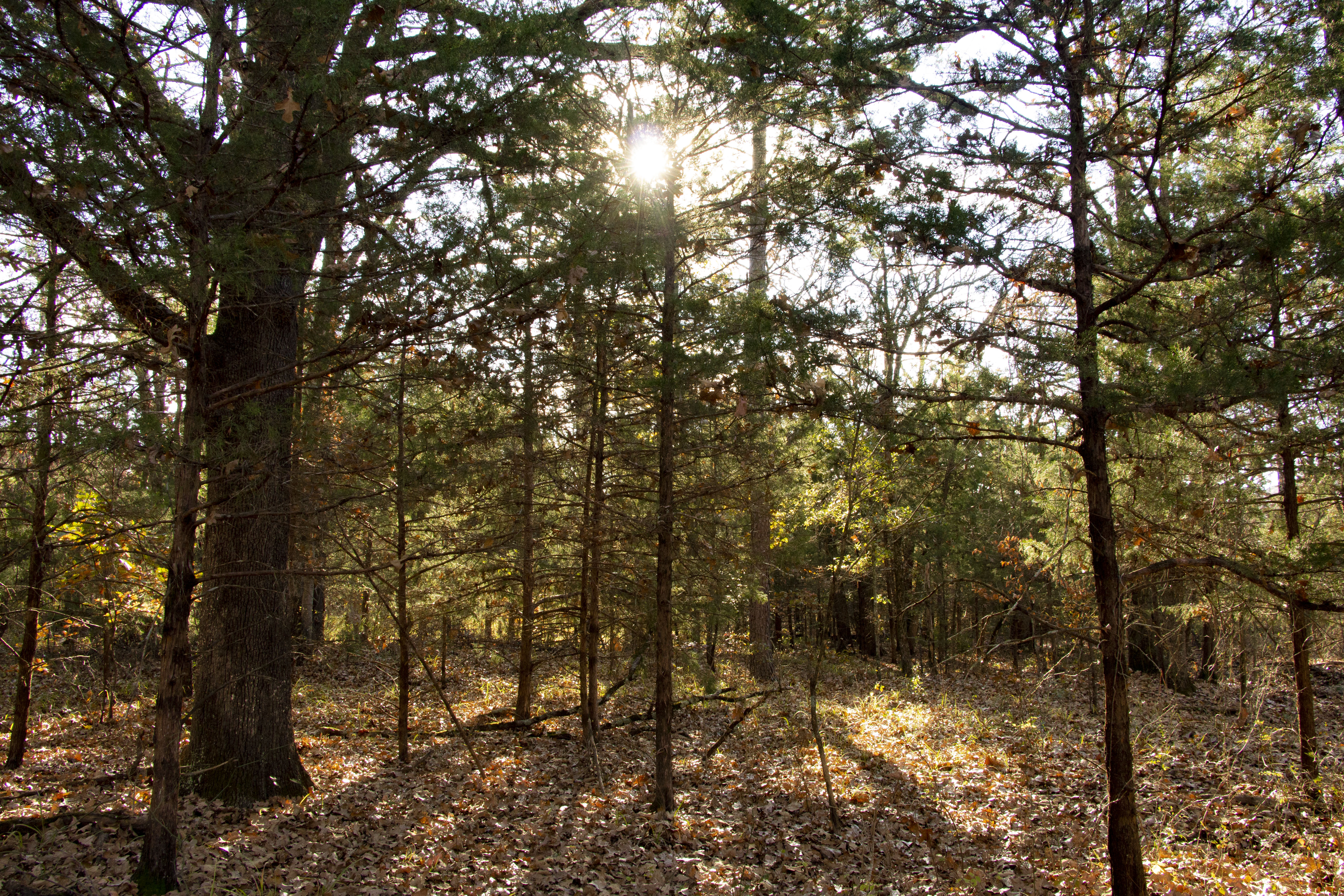 10 Acres with
