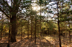 6.67 Acres With Utilities
