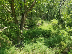 2 Acres with utilities