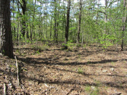 40 Acres Excellent Hunting Property