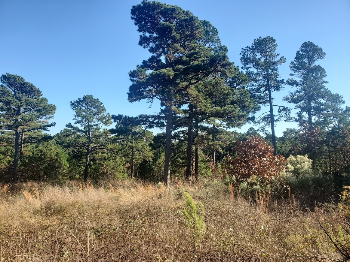 6 Acres Unrestricted Land With Utilities